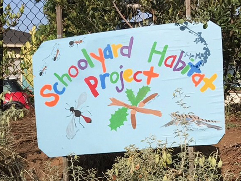 School garden sign. Credit Karen Taylor.