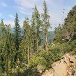yellow-cedar community