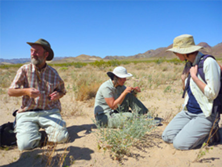 Treasure Hunters in the desert keying out an Astragalus plant. Photo by Amber Swanson.